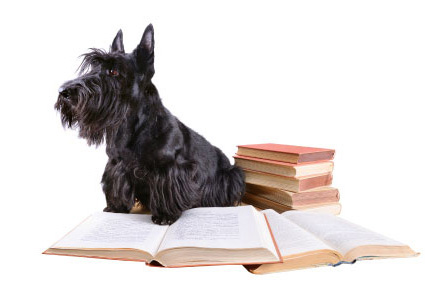 Dog Training Education